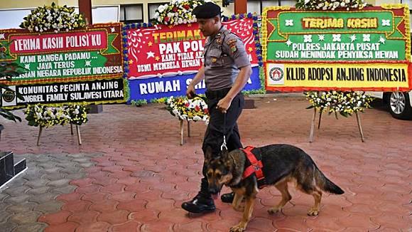Ini Sebab Pelaku Penyiraman 6 Anjing Tidak Ditahan Tempo Co Line Today