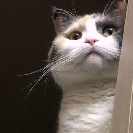 サイレント ニャー 猫