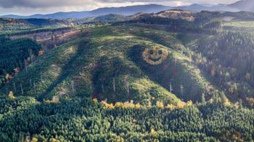 山坡上的笑臉 每年都在秋天裡綻放