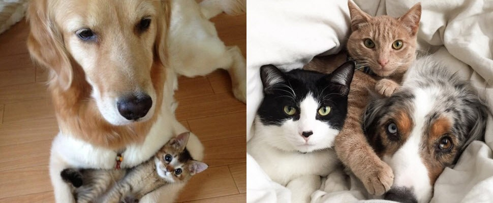 狗貓溫馨合照,看完內心莫名的感動~