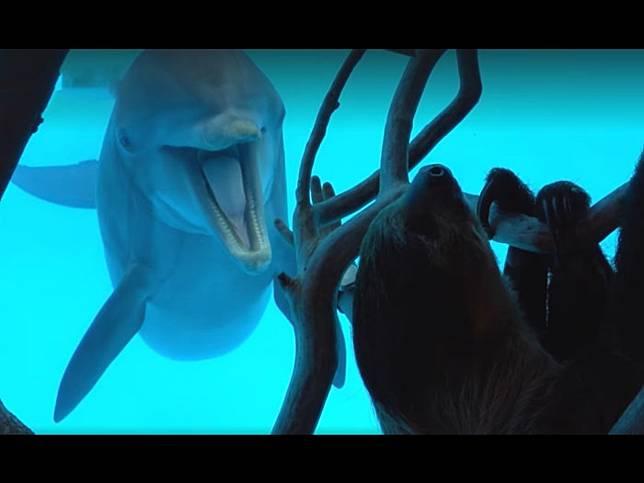 開放淡定樹懶在水族館四處睡 好奇海豚「嗨翻」打招呼:你素隨?