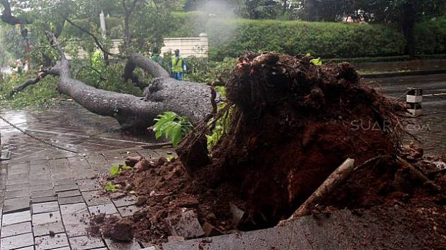 Petugas memperhatikan pohon roboh di depan rumah dinas Gubernur DKI Jakarta Anies Baswedan Jalan Taman Suropati, Jakarta, Selasa (25/2). [Suara.com/Oke Atmaja]