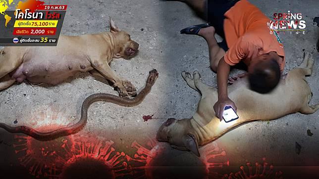 แทบขาดใจ! สุนัขท้องแก่ผู้ซื่อสัตย์ ยอมพลีชีพสู้กับงูเพื่อปกป้องเจ้าของ