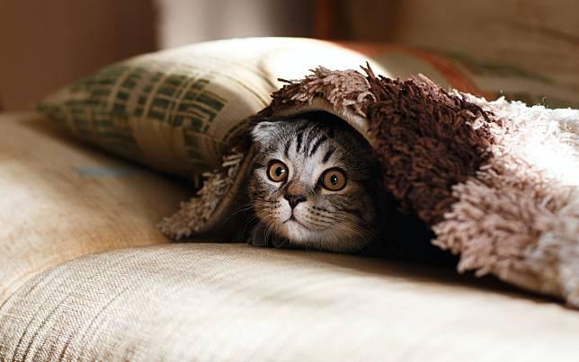 Viral Seorang Warga Dicurigai Racuni Kucing di Kompleks
