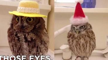 萌翻!主人幫這隻貓頭鷹戴帽子的淡定表情 真是太療癒了