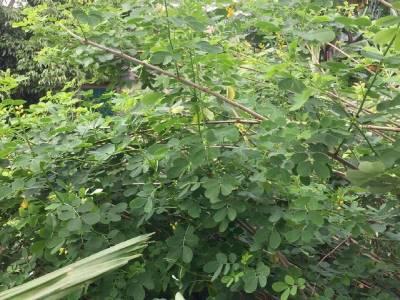 Hà Tĩnh: Vợ chết, chồng 'hấp hối' vì nhiễm độc do uống nước lá cây trong vườn để trị bệnh