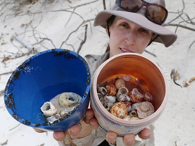 寄居蟹困在成堆塑膠垃圾中 島上專家:至少有57萬隻活活困死!