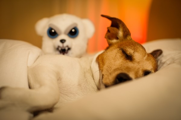 Do-Dogs-Dream-Have-Nightmares.jpg