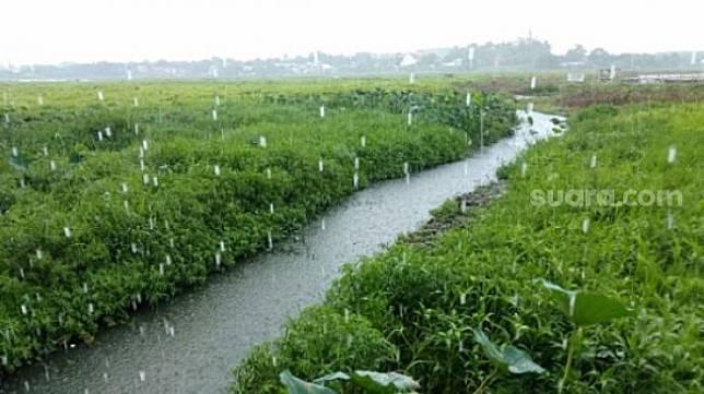 Ilisstrasi hujan. [SIAPGRAK.COM / Muhammad Yunus, prakiraan cuaca di Kalimantan Timur (Kaltim) hari ini, Kamis (14/10/2021) menunjukkan bahwa sebagian besar wilayah Kaltim akan mengalami cuaca berawan-hujan ringan-hujan petir di siang hari, cerah berawan-berawan-hujan ringan di malam hari, berawan-berawan tebal-hujan ringan-kabut di dini hari.</p><p>Dari perkiraan cuaca itu, suhu di semua kabupaten/kota di Benua Etam diprediksi memiliki rentang antara 23-31 derajat celcius.</p><p>Sementara itu, tingkat kelembapan di Kaltim diperkirakan antara 55-100 persen. Simak prakiraan cuaca selengkapnya di bawah ini:</p><p><b>Balikpapan</b></p><p>Siang hujan ringan</p><p>Malam cerah berawan</p><p>Dini hari kabut</p><p><b>Bontang</b></p><p>Siang berawan</p><p>Malam cerah berawan</p><p>Dini hari berawan</p><p><b>Penajam</b></p><p>Siang hujan ringan</p><p>Malam cerah berawan</p><p>Dini hari hujan ringan</p><p><b>Samarinda</b></p><p>Siang hujan ringan</p><p>Malam berawan</p><p>Dini hari kabut</p><p><b>Sendawar</b></p><p>Siang hujan ringan</p><p>Malam hujan ringan</p><p>Dini hari hujan ringan</p><p><b>Sangatta</b></p><p>Siang hujan ringan</p><p>Malam hujan ringan</p><p>Dini hari kabut</p><p><b>Tanah Grogot</b></p><p>Siang berawan</p><p>Malam cerah berawan</p><p>Dini hari berawan tebal</p><p><b>Tanjung Redeb</b></p><p>Siang hujan ringan</p><p>Malam berawan</p><p>Dini hari kabut</p><p><b>Tenggarong</b></p><p>Siang hujan petir</p><p>Malam berawan</p><p>Dini hari kabut</p>                                 </div>                                                                  <div class=
