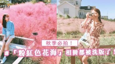 秋季必拍!唯美又夢幻的「粉紅色花海」整個相冊都被粉紅色洗版了啊!