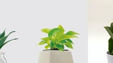 這些室內盆栽種起來!天然的空氣清淨機讓你有個清爽的秋天