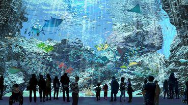 免飛日本!原裝進口、海外首家都會型水生公園Xpark 2020暑期開幕