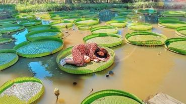 【桃園 景點】蓮荷園休閒農場 承重100公斤 男女皆可體驗的大王蓮及蓮花鞦韆 品嘗蓮子主題料理