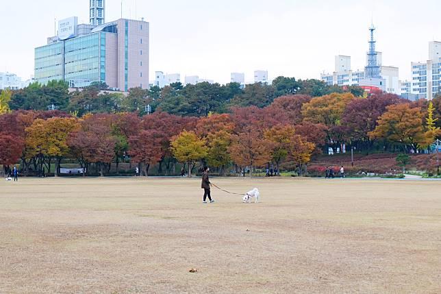 廣場中的草地是溜狗的熱門地,不時會看到主人與狗狗一起「放電」畫面~