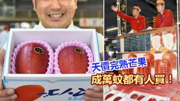 宮崎縣產完熟芒果 天價萬元都有人買!