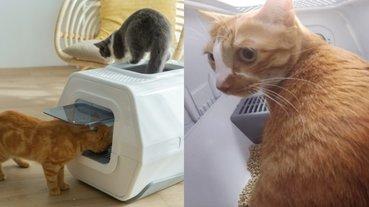 愛是創新的最大動力!痛失愛貓工程師研發 AI 智慧貓砂盆奪創新大獎
