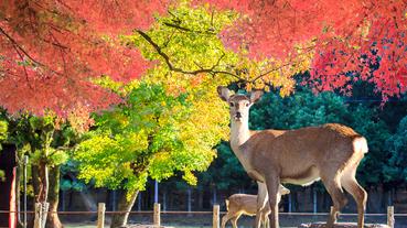 負能量退散!奈良必去的五大淨化心靈景點