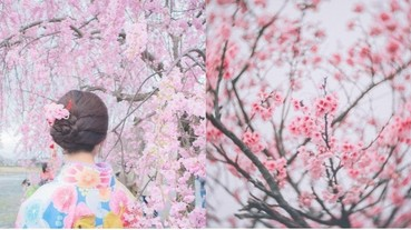 不用跑去日本!夢幻「粉色櫻花漸層花海」仙氣滿分,花開五成賞櫻趁現在!