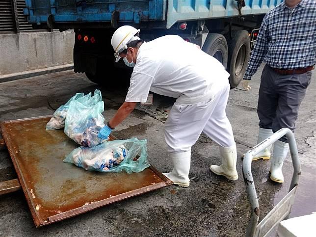 經檢驗禽流感陽性之雞隻屠體會依規定倒入染色劑後送化製銷毀。(圖片來源:臺北市動物保護處)
