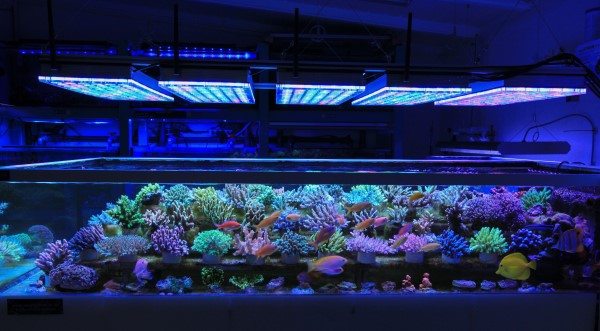 coral-farm-LED-light-1.jpg
