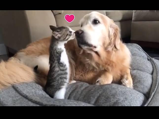 截肢小貓變身超萌「霸王龍」 還意外成為愛狗喵星人!