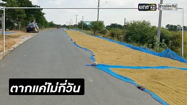 ชาวนาโคราชวอนเห็นใจ ตากข้าวบนถนน 1 ปี ทำเพียงไม่กี่วัน