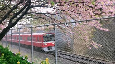 【東京自由行】經濟實惠的葉山女子旅套票!玩出專屬自己的一日東京近郊旅行