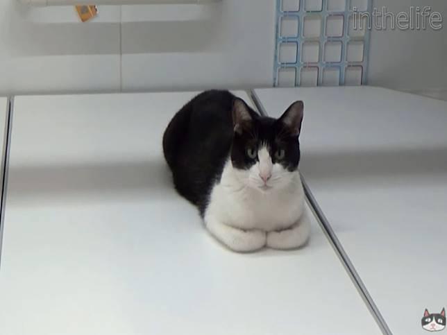 賓士貓愛泡澡 主動衝進浴缸等熱水陪主人一起洗香香!