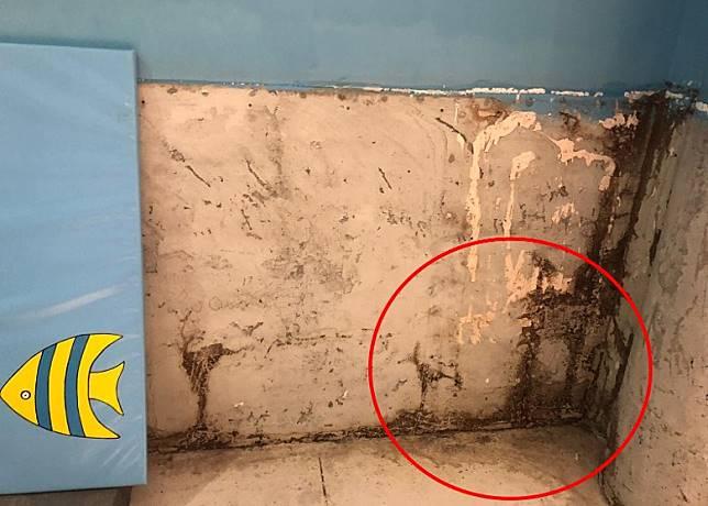牆邊出現半個成年人高的蟻竇(紅圈)。(何民傑提供)