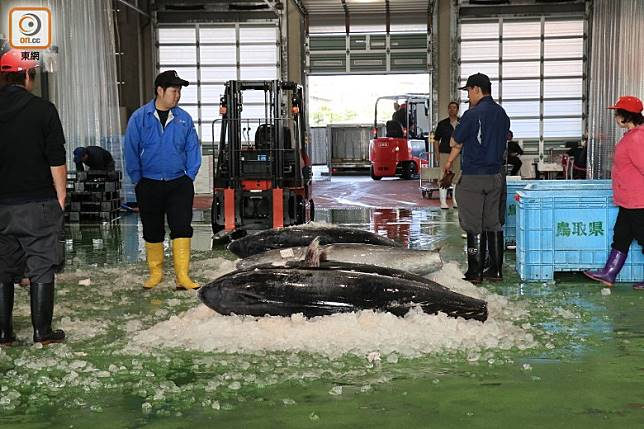 6、7月份正是本鮪(黑鮪)捕魚季,可以看到一米多的大魚拍賣。(李家俊攝)