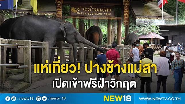 แห่เที่ยว! ปางช้างแม่สา เปิดเข้าฟรีฝ่าวิกฤต