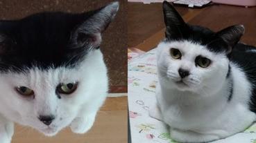 永遠戴黑帽的萌貓咪Atom,真的不打算把帽子摘掉嗎?