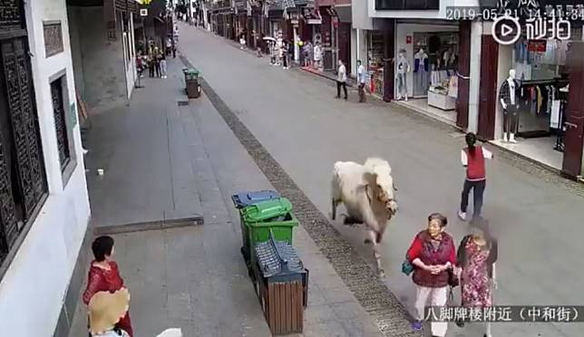 Chinese police shoot horse dead after panicked gallop through town puts three people in hospital
