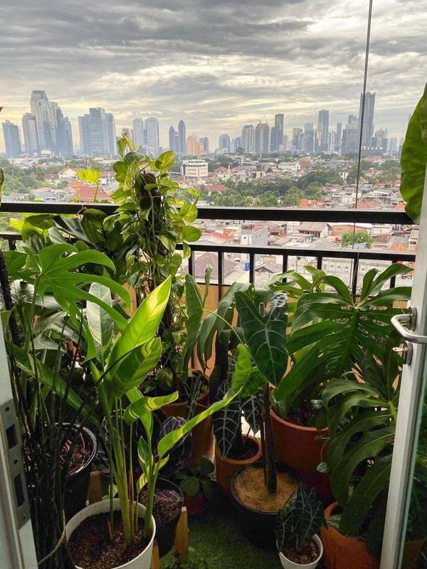 Kebun di apartemen Ernest Prakasa dan istrinya, Meira Anastasia. (Instagram/@meiranastasia)