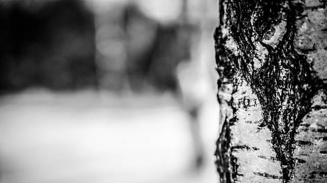 Mengenal Air Birch, Ternyata ini Manfaat Kesehatan dan Kecantikannya!