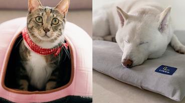 讓寵物涼快一夏~7 款寵物涼感用品推薦,毛小孩消暑降溫就靠它