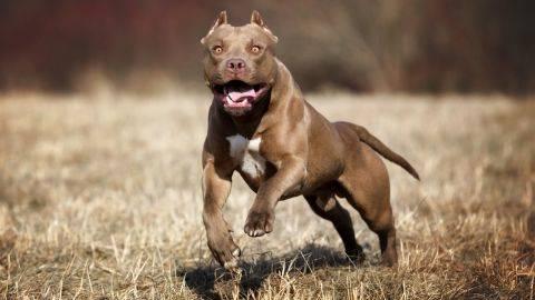 Aneh tapi Nyata, Seekor Anjing Punya Dua Mulut Satu Telinga