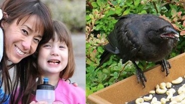 這位小女孩分享食物給烏鴉們 牠們竟不斷以這個方式回來報恩!
