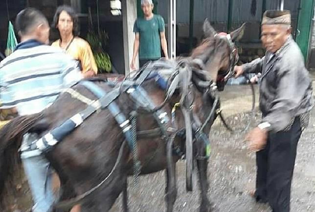 Viral, Kisah Tragis Kuda Mati saat Menarik Delman di Pinggir Jalan