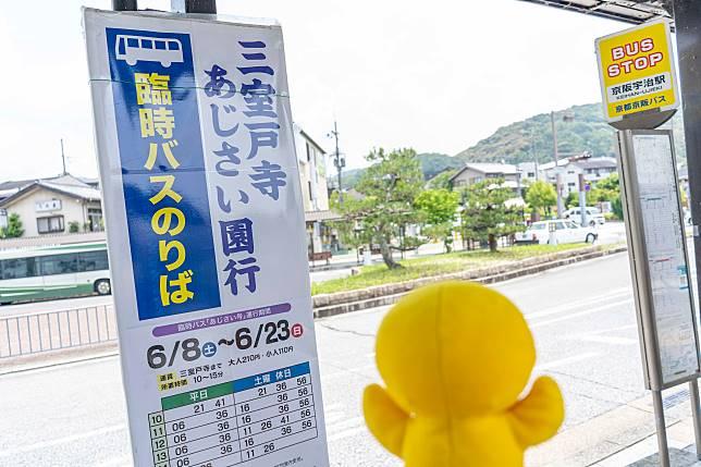 雖然2019年花期未過,但到三室戶寺的穿梭巴士已停駛,大家下年可以再用同樣方法。