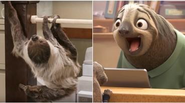 真實存在!國外神還原《動物方城市》樹懶公務員 極慢速讓網友直呼:等到要崩潰!