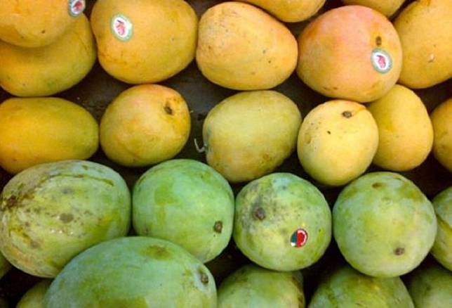Pakistan produced more than 1.5 million tons of mangoes in 2019 – and exported a record 115,000 tons worth US$80 million – making it the sixth-largest exporter of the fruit in the world.