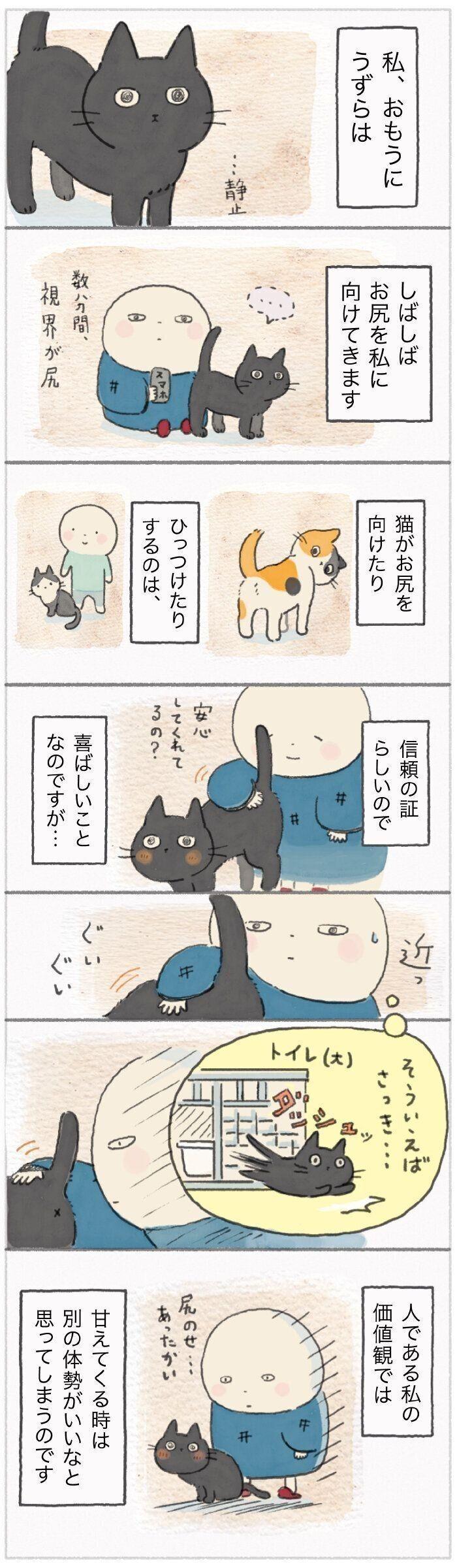 向ける 猫 おしり