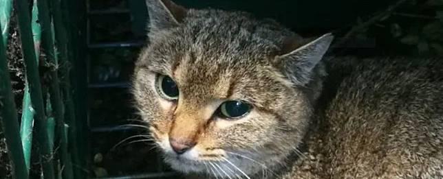 7400 Gambar Hewan Kucing Untuk Diwarnai Terbaik