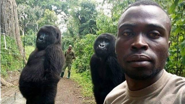 Foto gorila ber-selfie yang viral di dunia maya