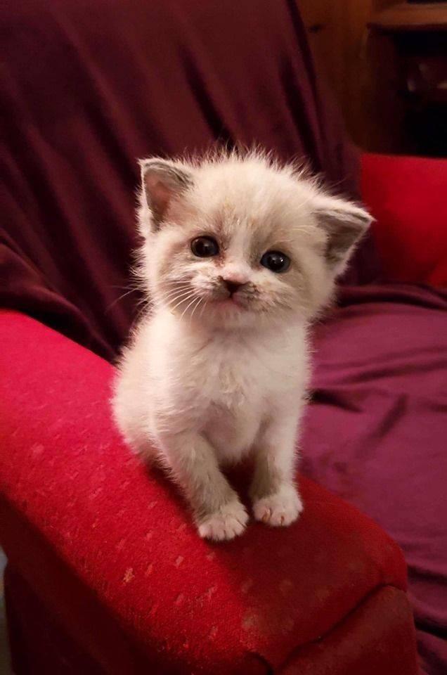 Anak Kucing Bernama Blossom Ini Viral Karena Tersenyum Saat Difoto Pernah Lihat Bobo Id Line Today