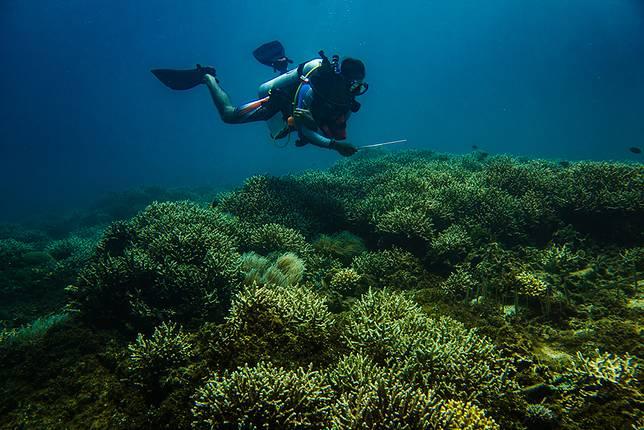 Pemandu selam di Polnustar Diving Center, Herjumes A Atjin, melayang di atas hamparan terumbu karang di Desa Petta, Kabupaten Kepulauan Sangihe.