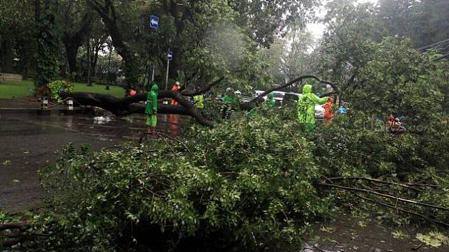 Sejumlah petugas memotong pohon roboh di depan rumah dinas Gubernur DKI Jakarta Anies Baswedan Jalan Taman Suropati, Jakarta, Selasa (25/2). [Suara.com/Oke Atmaja]