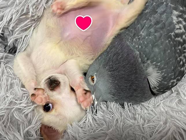 不能走的小狗和不能飛的鴿子成為好朋友 互動超療癒!