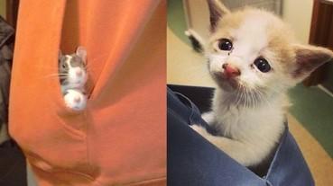 網友分享那些超迷你的「口袋動物」 簡直要萌死我啦!